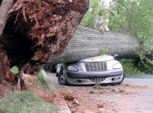 car-tree