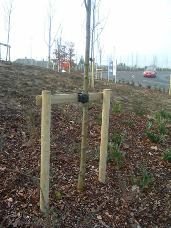 If trees need support to stand up they should be attached to firmly anchored stakes.